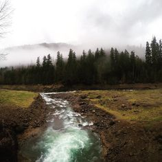 "clintergalactic: ""Confluence of Lookout Creek and Blue River, Oregon #pnw #pnwet…"