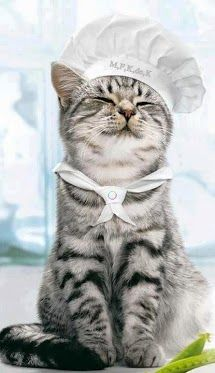 Pro Chef - your daily dose of funny cats - cute kittens - pet memes - pets in clothes - kitty breeds - sweet animal pictures - perfect photos for cat moms I Love Cats, Crazy Cats, Cool Cats, Animals And Pets, Funny Animals, Cute Animals, Baby Animals, Funniest Animals, Animal Babies