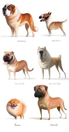 Breeds of dogs on Behance Dog Breeds Little, Large Dog Breeds, Best Dog Breeds, Dog Breeds List Of, Dog Breeds Chart, Low Maintenance Dog Breeds, Dog Breeds That Dont Shed, Hypoallergenic Dog Breed, Beautiful Dog Breeds