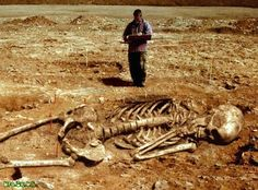 """GIANT SKELETONS FOUND IN WISCONSIN - """" One must wonder how much can they lift if twice the size of a average human today? Are these the Giants the Bible & many other civilizations have in their history and painted on their walls. The Bible in Genesis """" Ancient Aliens, Ancient History, Giants In The Bible, Giant Skeletons Found, Nephilim Giants, Nephilim Bones, Rd Congo, Foto Transfer, Unexplained Mysteries"""