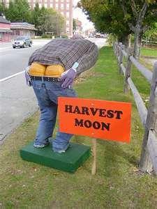 Outdoor fall displays pumpkin placement.