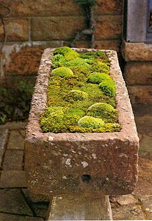Grow mosses in a stone planter or cinderblock outside.