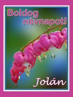 Boldog névnapot, Jolán! Name Day, Jenni, Erika, Barbie, Birthday, Birthdays, Saint Name Day, Barbie Dolls, Dirt Bike Birthday