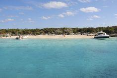 Alan's Cay, where the big iguanas play, exumas