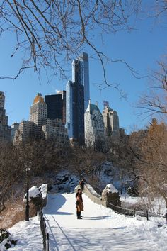 Great winter day in the Central Park