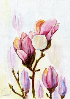 Magnolias, pink, Flowers, Watercolor Original Painting from the Artist #Realism