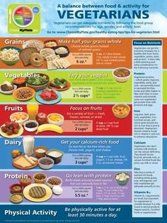 Laminated Poster: Vegetarian MyPlate Poster : 24x18in