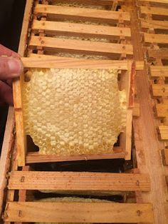 ECO BEE BOX - MODERN BEEHIVES & BEES: Presentation at the Wyoming Bee College Cheyenne March 2016
