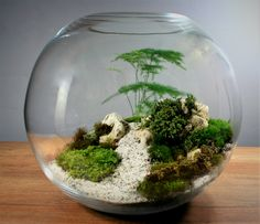 You can make some really cool designs with small bowls Terrarium Jar, Small Terrarium, Terrarium Plants, Little Gardens, Small Gardens, Mini Plants, Indoor Plants, Moss Plant, Indoor Water Garden