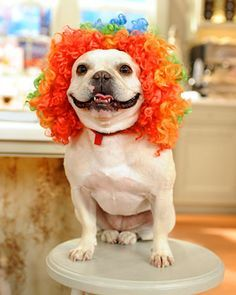 Best dogs, Dog costumes and Costumes for halloween on Pinterest