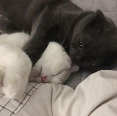 These sweet kittens will make you happy. Cats are wonderful friends. Baby Cats, Baby Animals, Funny Animals, Cute Animals, Animals Images, Kittens Cutest, Cute Cats, Funny Cats, Pretty Cats