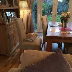 Bevel Natural Solid Oak Large Welsh Dresser And Dining Table From Oak  Furniture Land