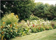 Flowers, Herbs, & Vegetables in my garden in Illinois
