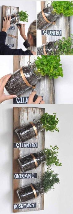 :: Mason Jar Herb Garden Live in an apartment? You can have an herb garden, too. Use mason jars and a wooden board on a spare kitchen wall.Live in an apartment? You can have an herb garden, too. Use mason jars and a wooden board on a spare kitchen wall. Mason Jar Projects, Mason Jar Crafts, Mason Jar Diy, Paint Mason Jars, Pickle Jar Crafts, Pickle Jars, Mason Jar Herbs, Mason Jar Herb Garden, Herbs Garden