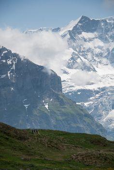 Swiss Alphorn Melodies