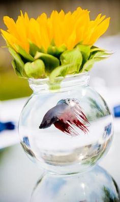 Daisy glass beta fish. The beta fish can be exchanged by a goldfish. Beta fish have long lives and do not need water change! Fancy and DIY. Great for the beach!
