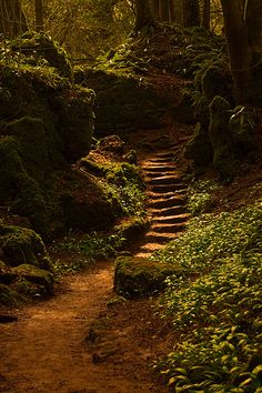forest path by camperman999 on Flickr