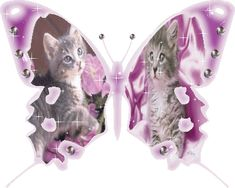 animated gif butterflies images glitter 60.gif -  album gallery,animated gif butterflies images glitter,gif blog,images friends,facebook sha...