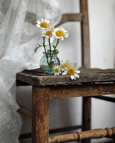 Image about beautiful in floral aesthetics🌸🍃 by ♡ Daisy Love, Daisy Daisy, Deco Nature, Flower Aesthetic, Still Life Photography, Ikebana, Belle Photo, Vintage Decor, Beautiful Flowers