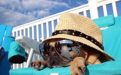 Cosa fare per difendersi dal caldo estivo e cercare di tenere fresca la propria casa o il proprio appartamento?