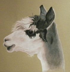 Ande Alpaca Color Pencil Painting Print by wilbee26 on Etsy, $15.00