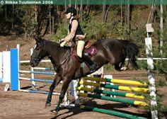 Estonian Native gelding Ruubik