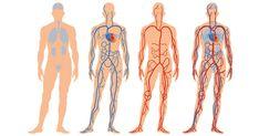 6 yksinkertaista tapaa parantaa verenkiertoasi