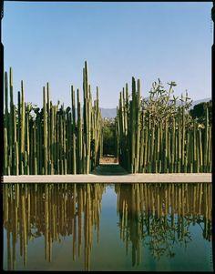 Jardin Etnobotanico de Oaxaca