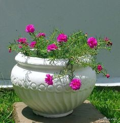 Marble Planter Marble Flower Pot Marble Pot JSBS-Professional manufacturer for marble planter, marble Flower Pot! Portulaca Grandiflora, Portulaca Flowers, Small Balcony Garden, Garden Pots, Planting Succulents, Planting Flowers, Beautiful Gardens, Beautiful Flowers, Bottle Garden