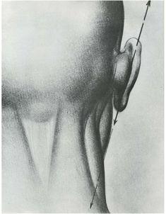 Burne hogarth -_drawing_the_human_head Body Reference Drawing, Body Drawing, Anatomy Reference, Life Drawing, Figure Drawing, Anatomy Sketches, Anatomy Drawing, Drawing The Human Head, How To Draw Ears