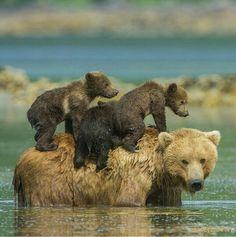 Triplet piggyback