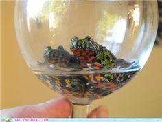 Fire Bellied Toad Wine