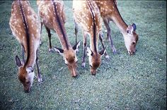Deer #LIFECommunity #Favorites From Pin Board #15