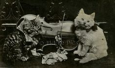 Antique Photograph Vintage Old Photo CATS KITTENS by FiddlePics, $28.00