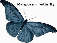 Mi Palabra Del Dia: Mariposa - Butterfly