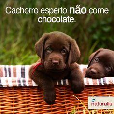 Aproveite bem o fim de semana e lembre-se: Cachorro esperto não come chocolate! #Alimente_Se_Bem #Cachorro #Dicas