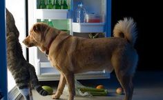 What foods should you never feed your dog? There are certain foods not to feed dogs under any situation. Pay attention to this list of toxic foods.