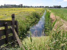 Mooie natuur middenin het woongebied Wilgenrijk, Holland, polder, landschap, water