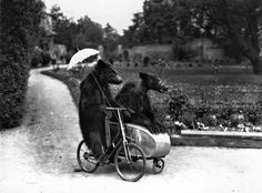 Two brown bears riding on a bicycle and side car, 1928.