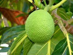 Corazon Fruta Free 427 Metabluedb
