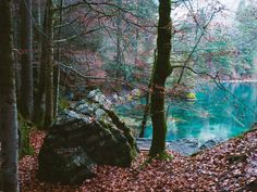 If you want to go to one the most beautiful places in Switzerland, you definitely have to visit the lake Blausee near Bern. I went there on a cold autumn day. The crisp air surrounded me and the leaves were rustling while I walked through the forest. Wonderful Places, Beautiful Places, Places In Switzerland, Autumn Day, Places To Travel, Most Beautiful, To Go, Plants, Travel Destinations