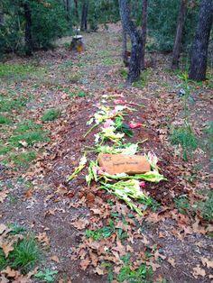 Eloise Woods community burial park. Green burial in Cedar Creek, Texas