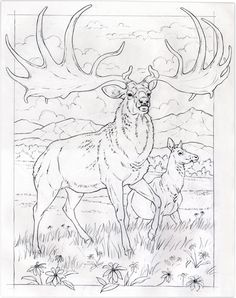 Animals as inspiration: Observations, artwork & distractions of a contemporary natural illustrator Coloring Book Art, Coloring Pages For Boys, Animal Coloring Pages, Deer Drawing, Bunny Drawing, Extinct Animals, Prehistoric Animals, Animal Drawings, Art Drawings