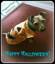 Our little Office Pumpkin wishes you all a SPOOKTACULAR #Weekend :) #OfficeDog