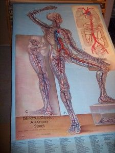 Old Anatomical Teaching Chart. Nerves.