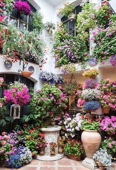 Patios de Córdoba XX by Diego F. Molina on balkonkasten Dream Garden, Garden Art, Garden Plants, Balcony Gardening, Balcony Flowers, Design Jardin, Flower Garden Design, My Secret Garden, Flower Boxes