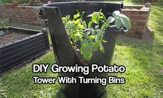 DIY Growing Potato Tower With Turning Bins - With this growing potato tower made of bins, we offer a DIY solution which is very easy to heighten your potato yield just by turning the inside bin!