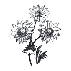 Stock image of 'Chamomile flowers sketch. This is picture drawed with pencil.'