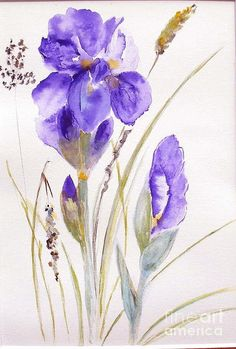 Flower Painting - Iris by Sibby S
