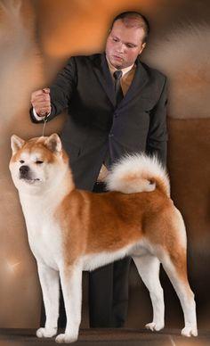 Hoshi Fuyasu Go of Fighting Dog  kennel Yucatan BR - Brazil Akita